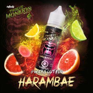 harambae-twelve-monkeys.jpg